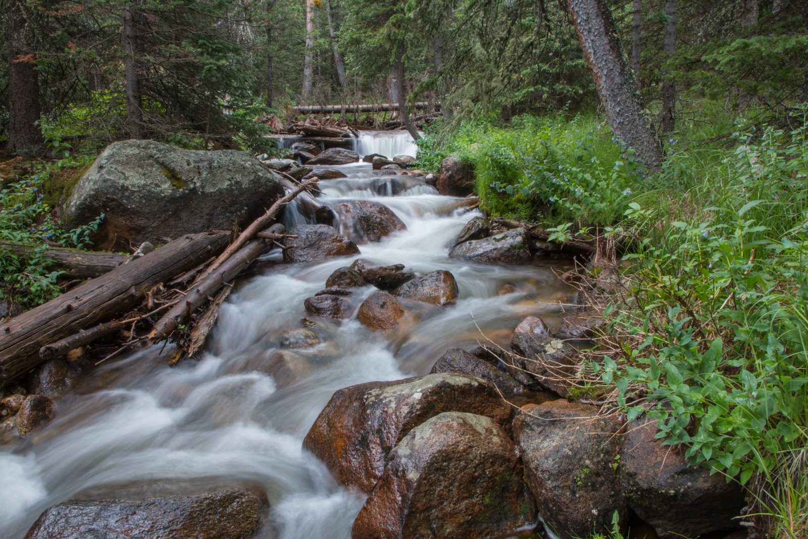 Chicago Creek Cascading through the Forest